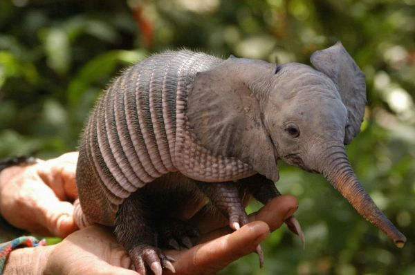 20 photos incroyable d animaux hybride