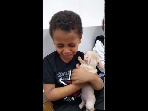 Vignette : Quand un petit chiot console un enfant