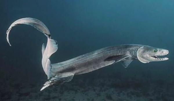 requin lezard