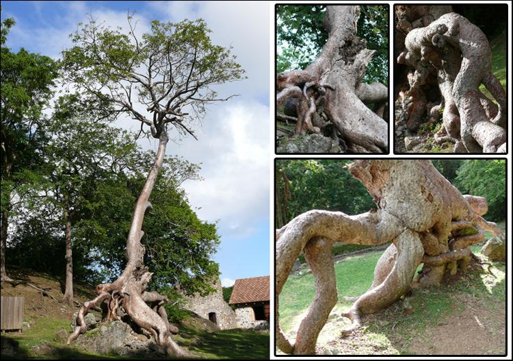 12 arbres insolites