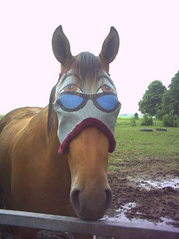 7 photos d animaux qui font rire - Cheval rigolo ...