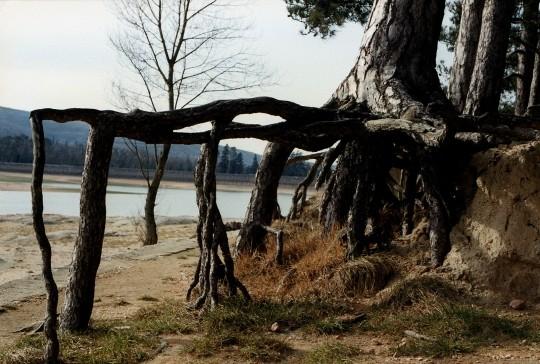 arbre insolite