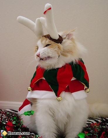 Le renne du Père Noël (Chat)