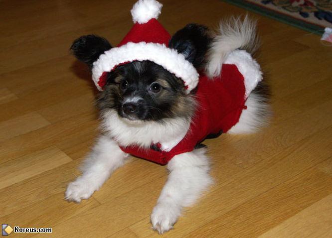 Le chien du père Noël