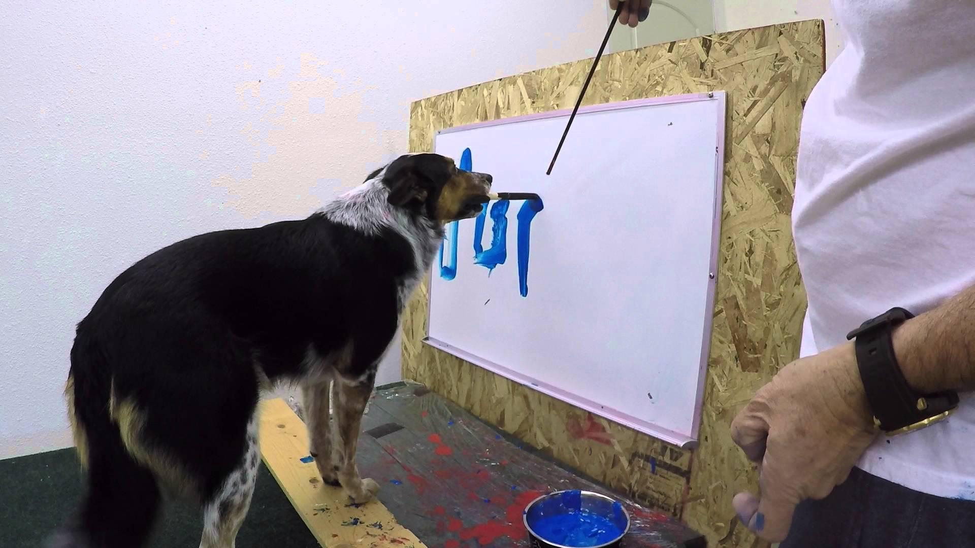 jumpy le chien qui  u00e9crit son pr u00e9nom