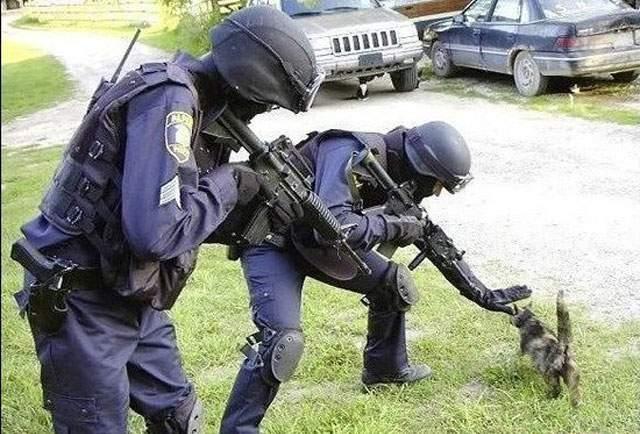 cat-cops