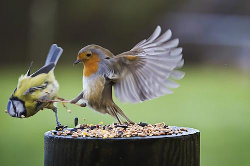10 photos d'oiseaux drôles et insolites