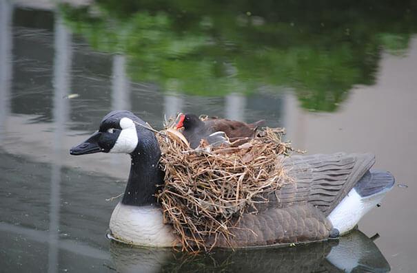 nids d'oiseaux, lieux insolites