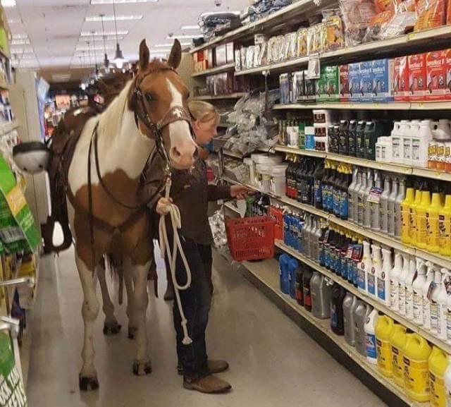 Aller au supermarché avec son cheval