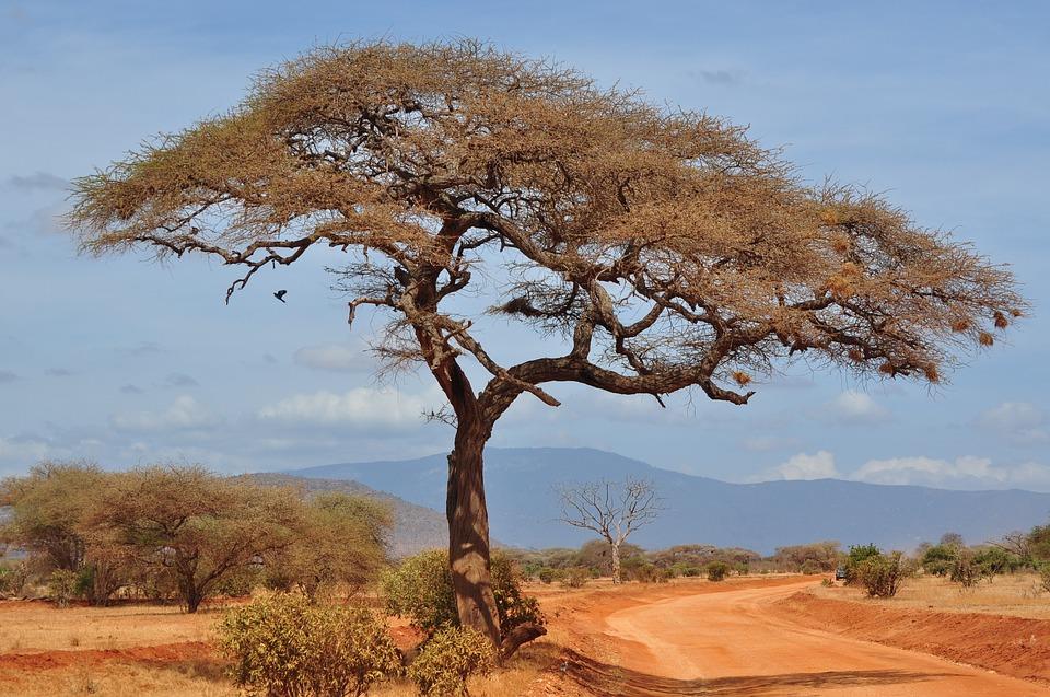 Les activités à ne pas rater durant un voyage en Afrique